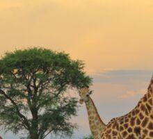 Giraffe - Sunset Storm Watchers Sticker