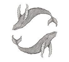 Megaptera Novaeangliae [Ted] II by hannighan