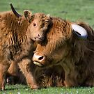 Mother and Calf by Jonnyfez