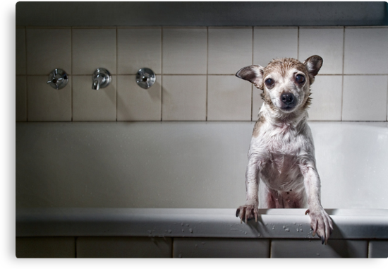 Bath Time's Over by Janet Rogerson
