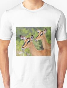 Black Faced Impala - Together in Curiosity T-Shirt