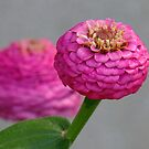 Ice Cream Flowers by Tracy Wazny
