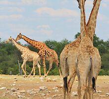 Giraffe - Jealousy and Funny Love by LivingWild