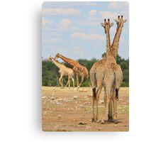 Giraffe - Jealousy and Funny Love Canvas Print