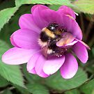 Bumble Bee in sphere. by Dawnsuzanne