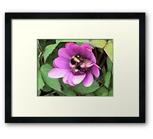 Bumble Bee in sphere. Framed Print
