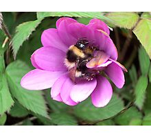 Bumble Bee in sphere. Photographic Print