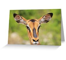 Black Faced Impala - Portrait of Pure Greeting Card