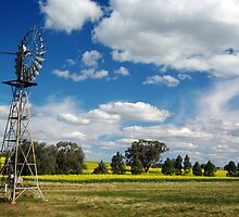 SPRING CANOLA AND WINDMILL. by Helen Akerstrom Photography