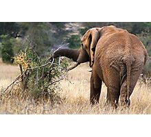 Individual Elephant Photographic Print