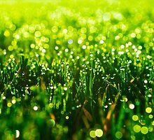 Beauty in Green by Parker Cunningham