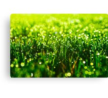 Beauty in Green Canvas Print