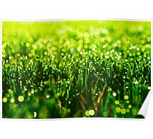 Beauty in Green Poster
