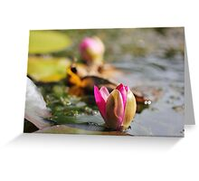 Lily Love. Greeting Card