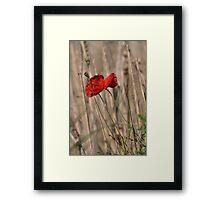 Poppy In Field Framed Print