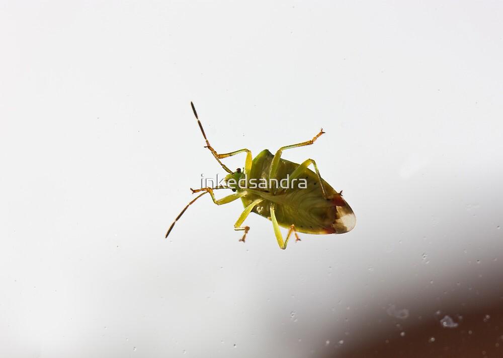 My house has been bugged! by inkedsandra