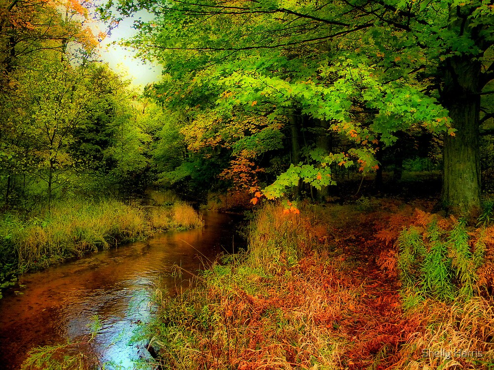 A Quiet Spot On Beaver Creek by Shelly Harris