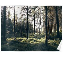 Peaceful Forest Poster