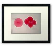 Egg cells under the microscope. Framed Print