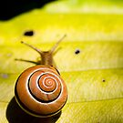 tree snail by Manon Boily