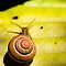 (Insects, Spiders & Other Category) - Class - Gastropoda - Slugs & Snails