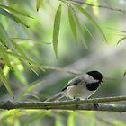The Scolding Chickadee by Judy Wanamaker