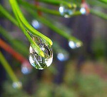 Raindrop by olmik