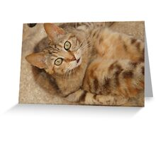 Ive just been tickled! Greeting Card