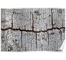 Old bark with cracks. Poster