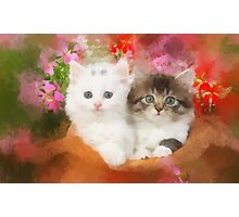 Kittens in a pot Photographic Print