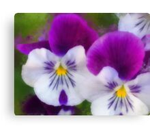 Pansies 2 Canvas Print