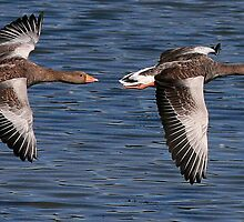 A Brace Of Greylags by snapdecisions