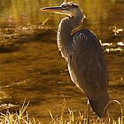 Rock lake heron by creativegenious