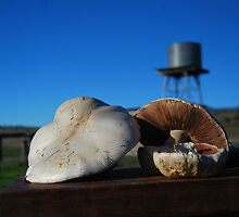 Mushroom Steak by suziimages