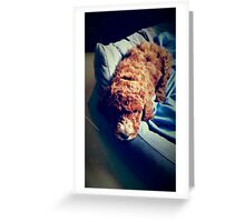 Groodle Puppy Zoe Greeting Card