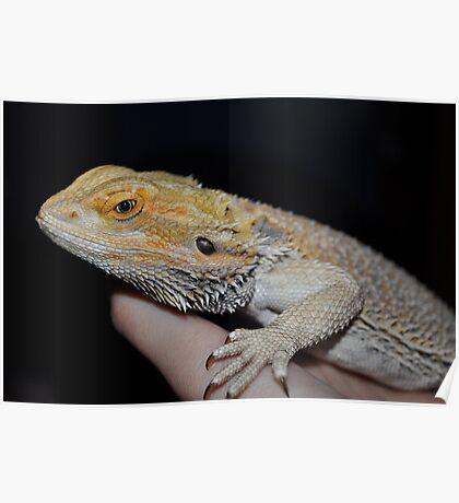 Meet Spike (: Poster