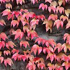 Autumn leaves against old stone by Kiriel