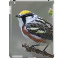 Chestnut-sided Warbler Portrait iPad Case/Skin