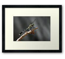 Clour of the fly Framed Print