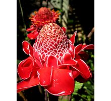 Funky red waxy flower Photographic Print