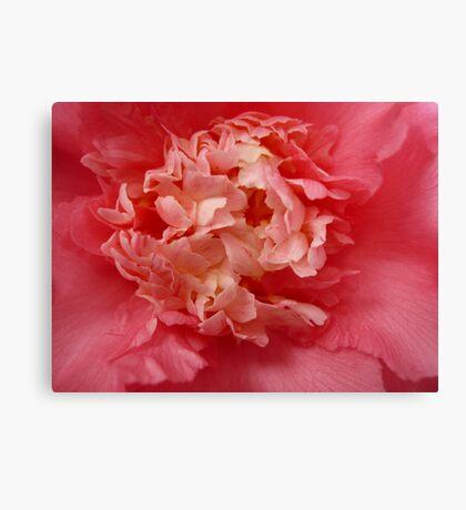 OG Camellia 1 Canvas Print
