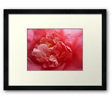 OG Camellia 2 Framed Print