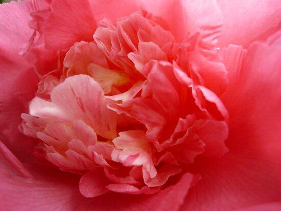 OG Camellia 2 by beeden