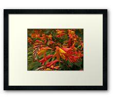 Multitude of Vibrant Blooms Framed Print