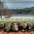 Foggy Farm by Monica M. Scanlan