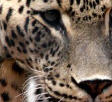 Persian Leopard Sticker