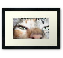 green cat eyes Framed Print