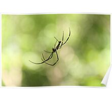 Jungle spider Poster