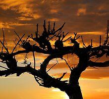 Grape Vine Silhouette by John Wallace