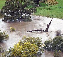 Romsey - Deep Creek in Flood  by MIchelle Thompson